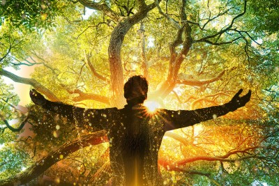 Tree of Life Meditation & Healing