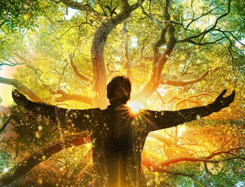 How can ancient wisdom of the Trees & Tree of Life help us?