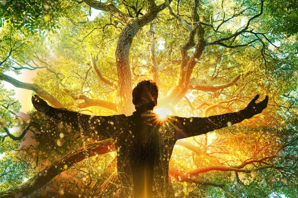 Tree of Life Meditation & Healing